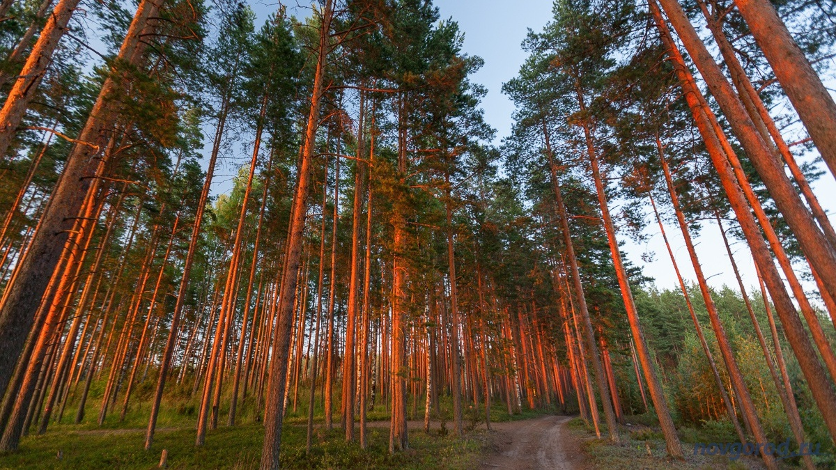 маячка советы деревья леса нижегородской области фото люди